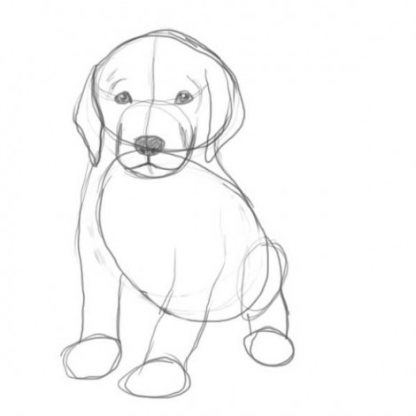 how to draw a sitting dog easy