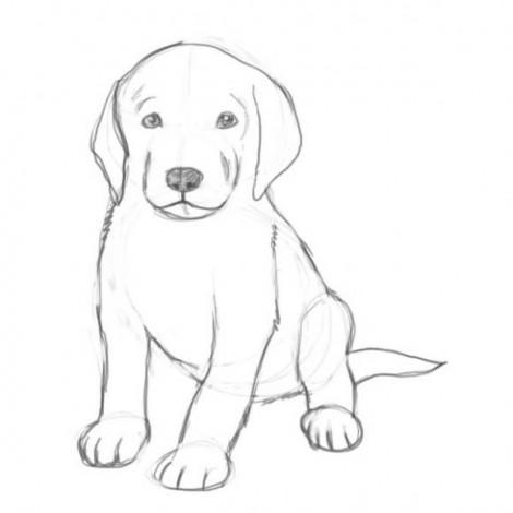 Животные картинки для детей нарисованные цветные 12
