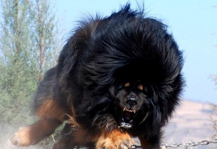 Топ 10 кучета пазачи