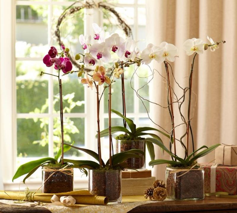 Орхидея отглеждане