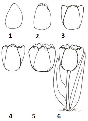 Как се рисува цвете