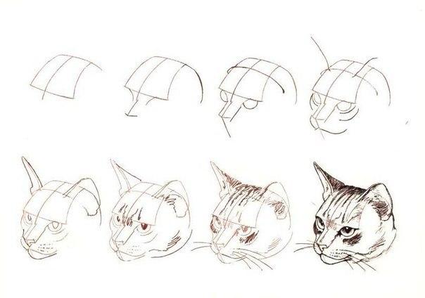 Как се рисува котка