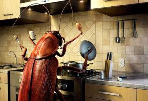 хлебарки в къщи