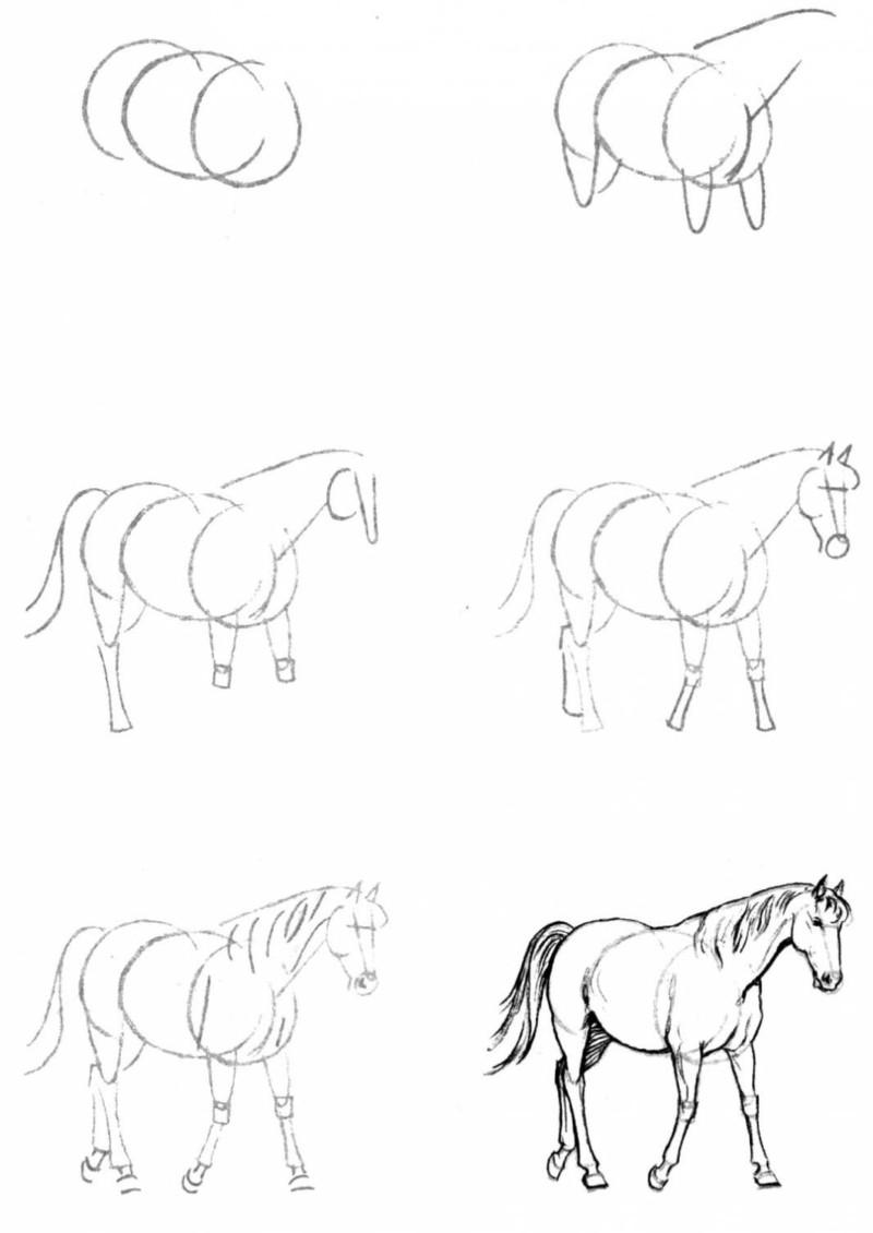 Как се рисува кон