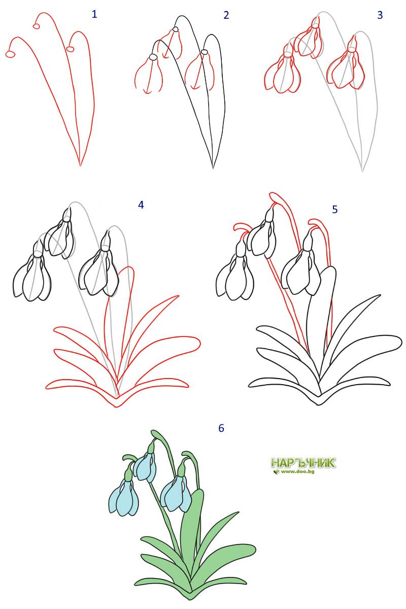 Как се рисува кокиче