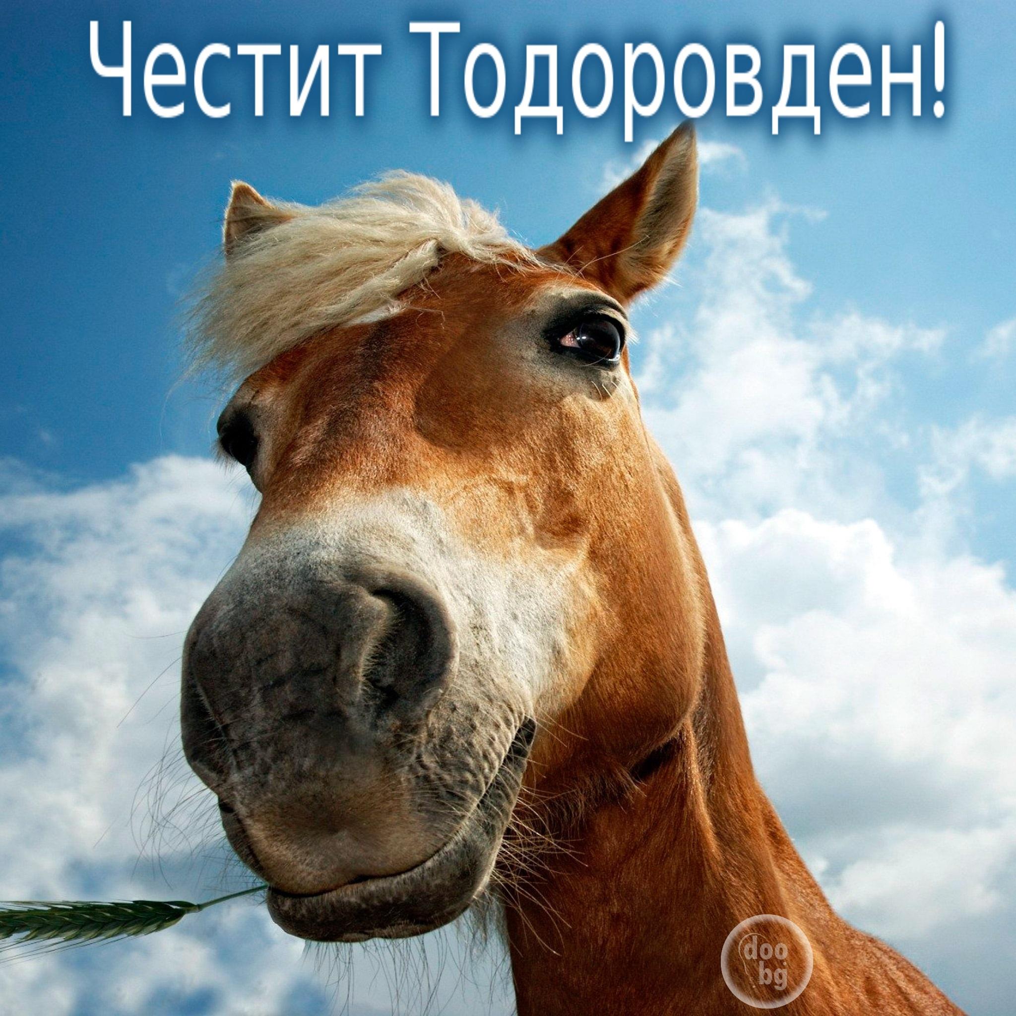 Весела картичка за Тодоровден
