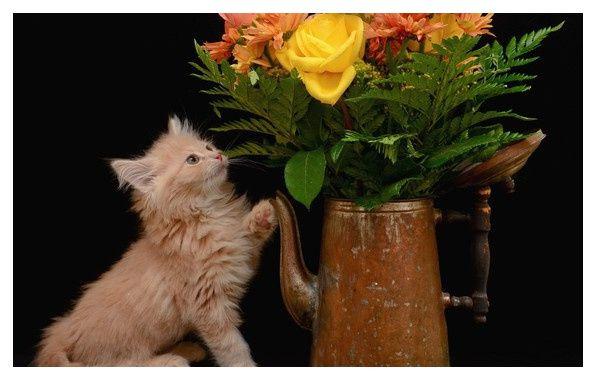 Картинки рожден ден с коте