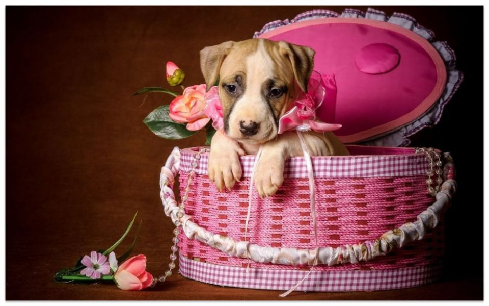 Картинка за рожден ден с кученце