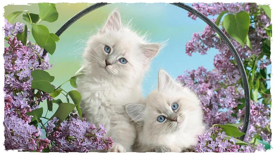 Картинка за рожден ден сладки котенца