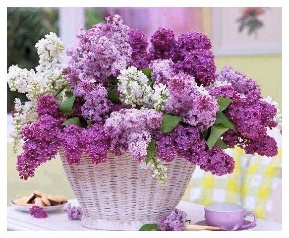 Картинки с цветя за рождени дни