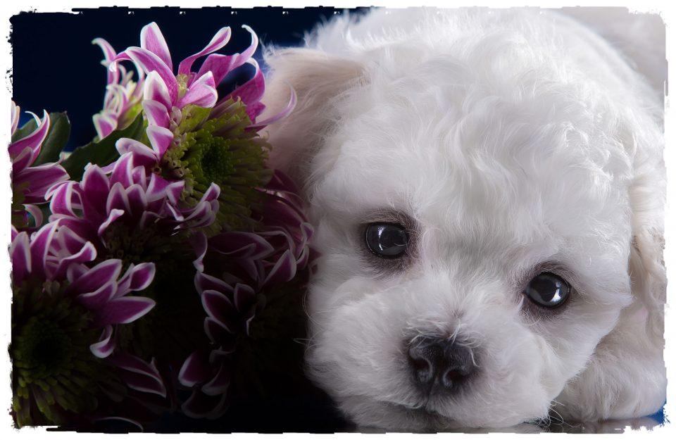 картинки за рождени дни с кучета