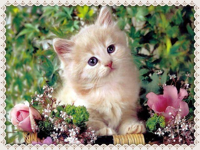 Картинки за рождени дни с коте