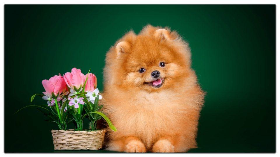 Картинки за рождени дни с кученце