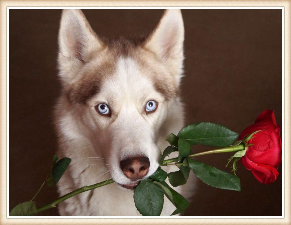 Картинки за рожден ден с куче и роза