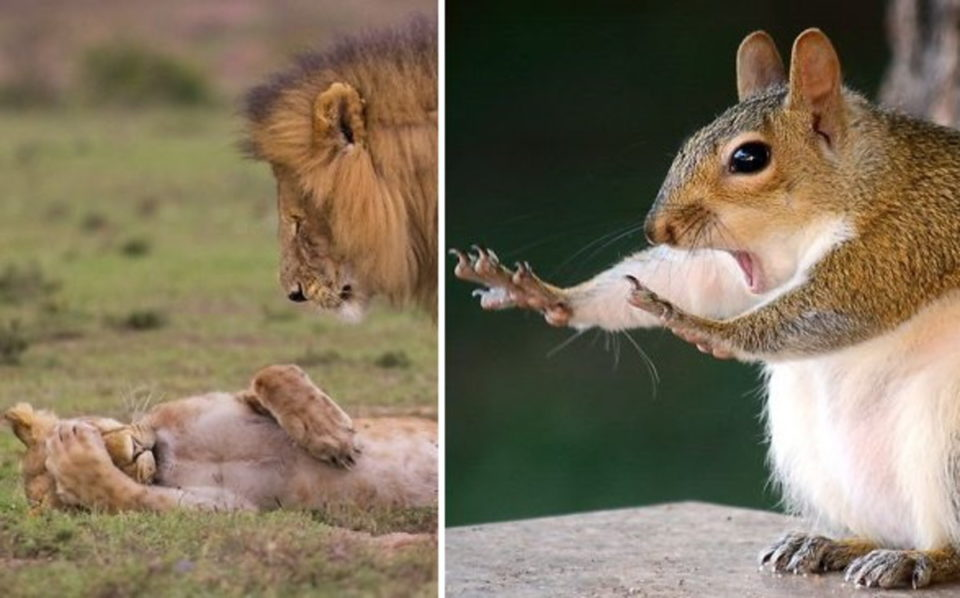 Смешни снимки на животни