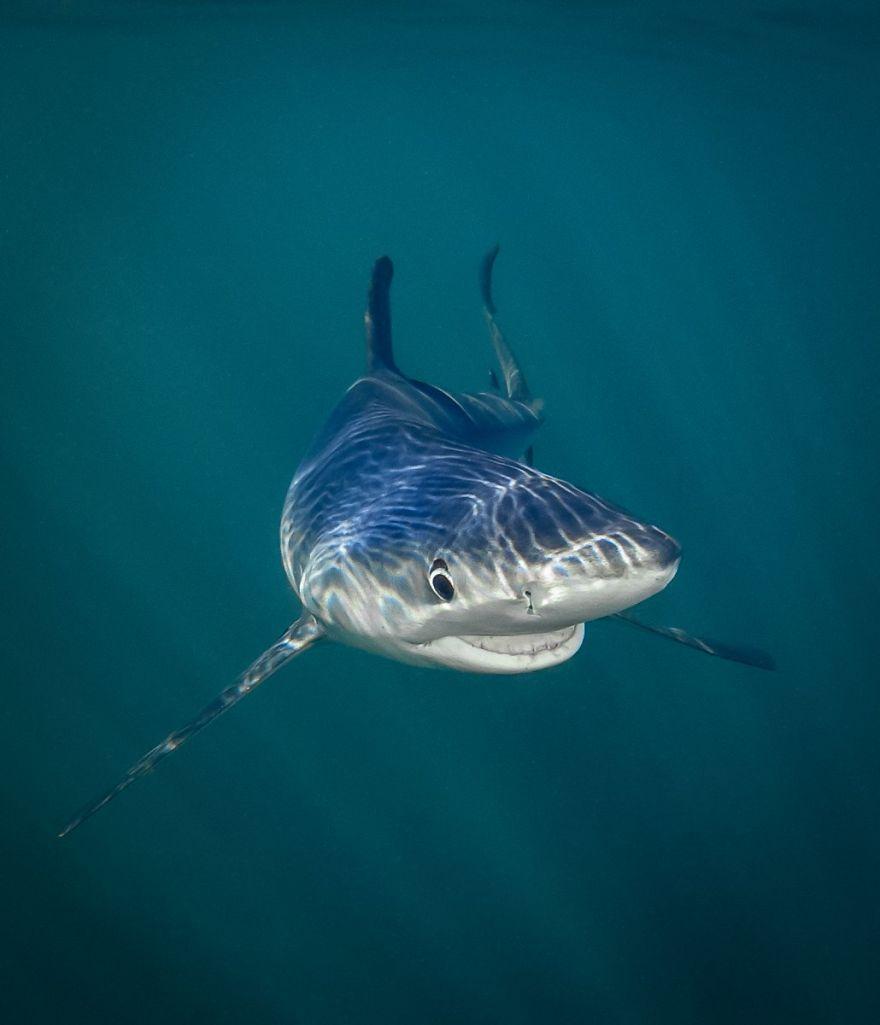 смешна снимка на акула