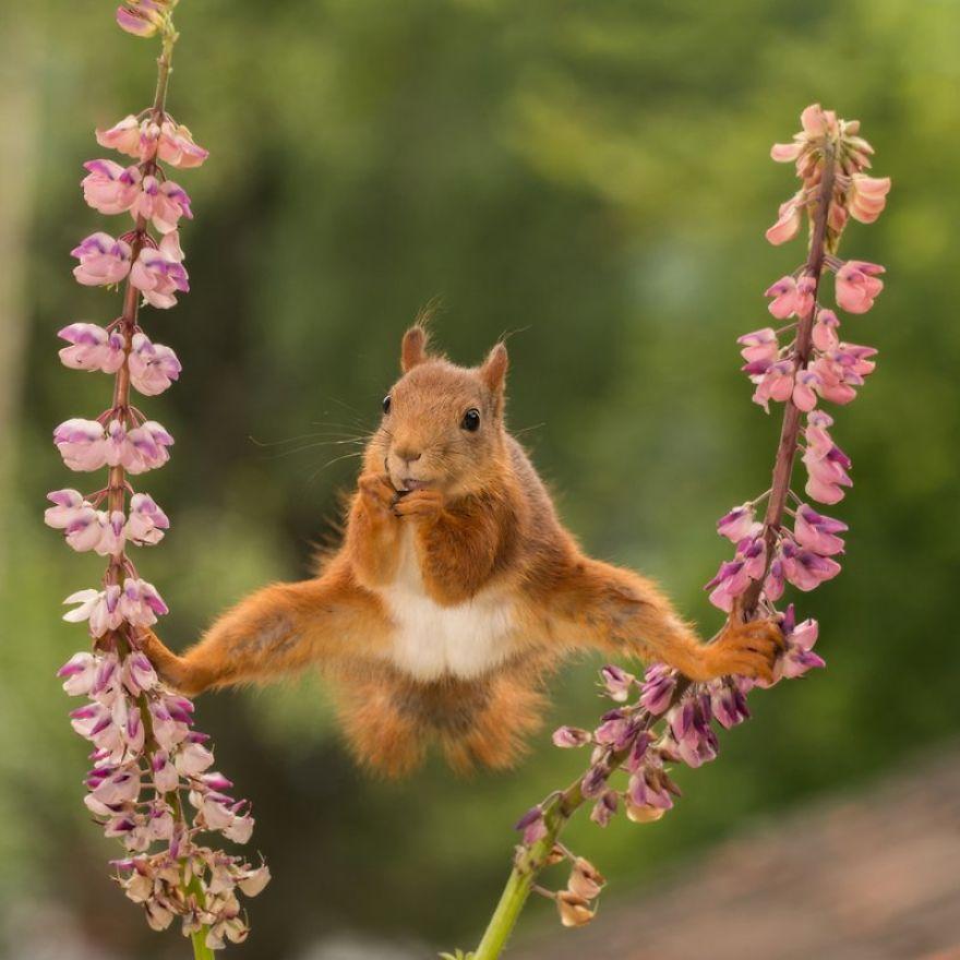 смешни снимки - катерица