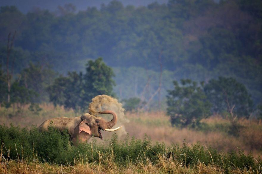 смешна снимка на слон