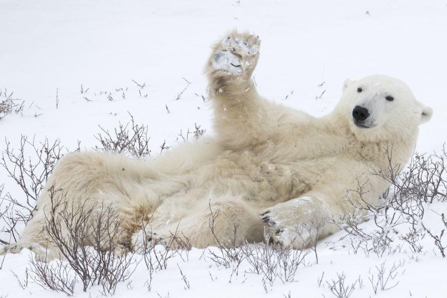 смешна мечка