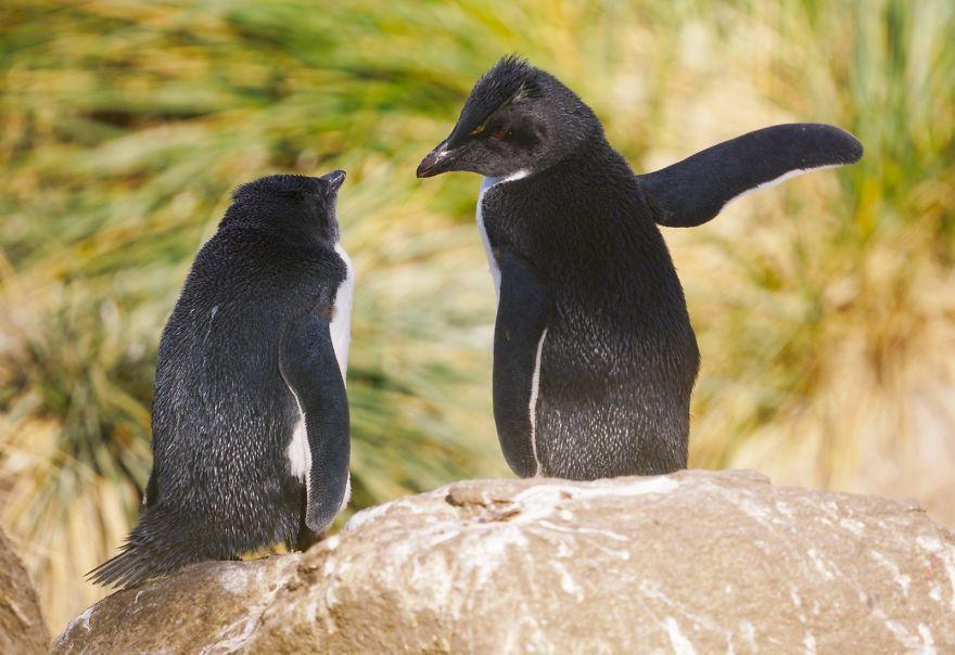 смешни пингвини