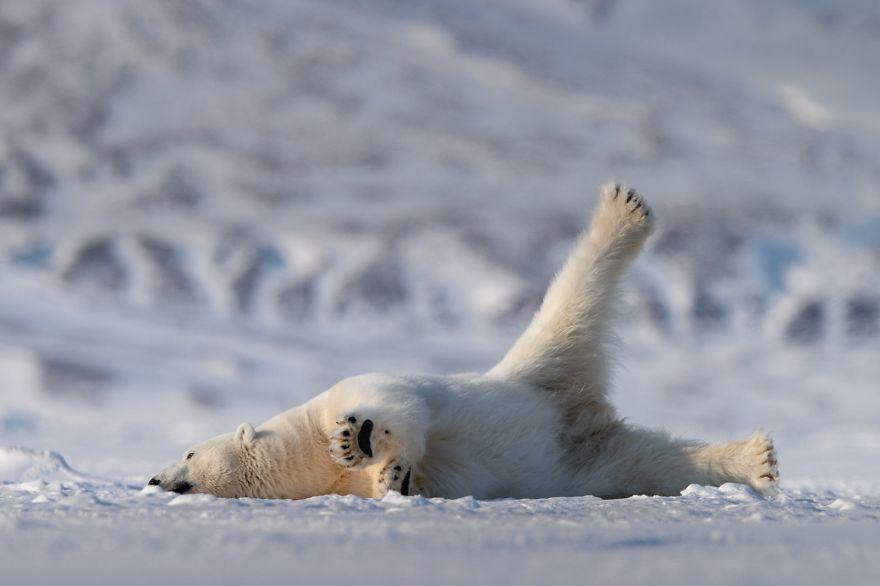 смешни снимки - мечка