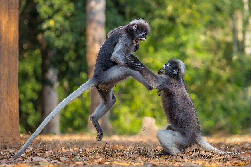 смешни снимки - маймуни