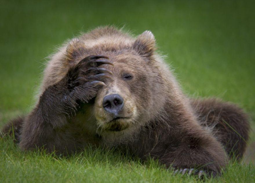 смешни снимки - мечки
