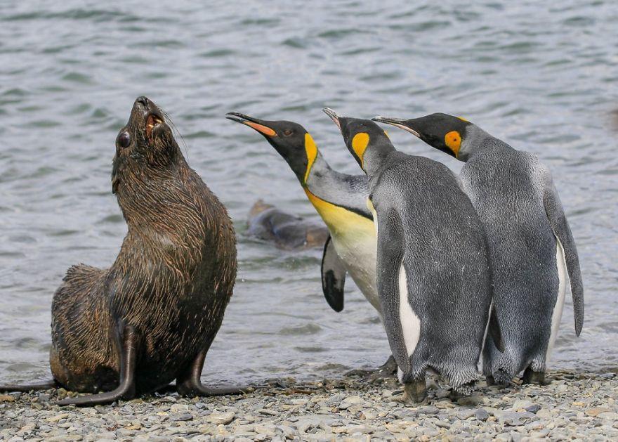 смешни снимки - пингвини